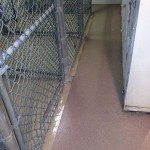 Dog Kennel Quartz Shop Coat Installation Beige